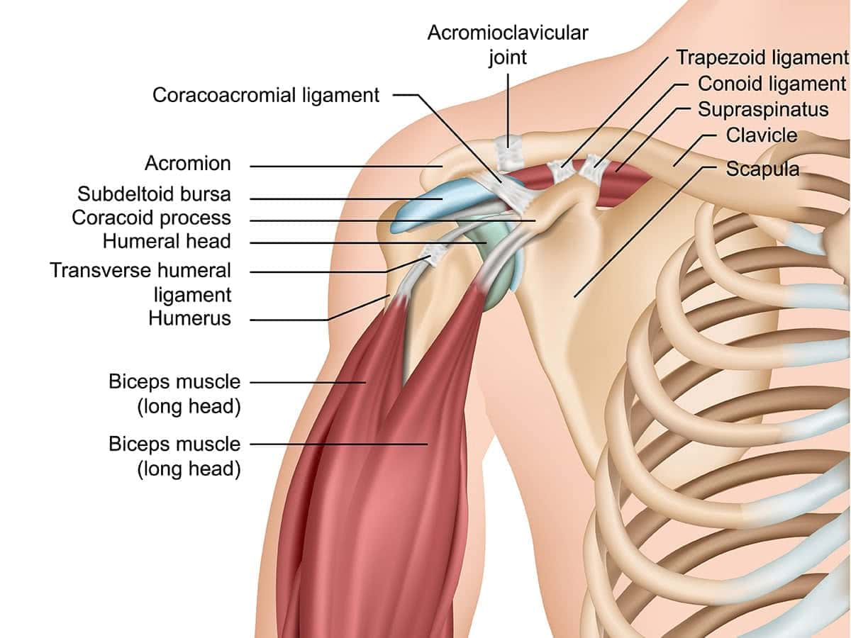 Dr Raymond Yu Adelaide Orthopaedic Surgeon Shoulder Specialist Best image shoulder arthritis 1